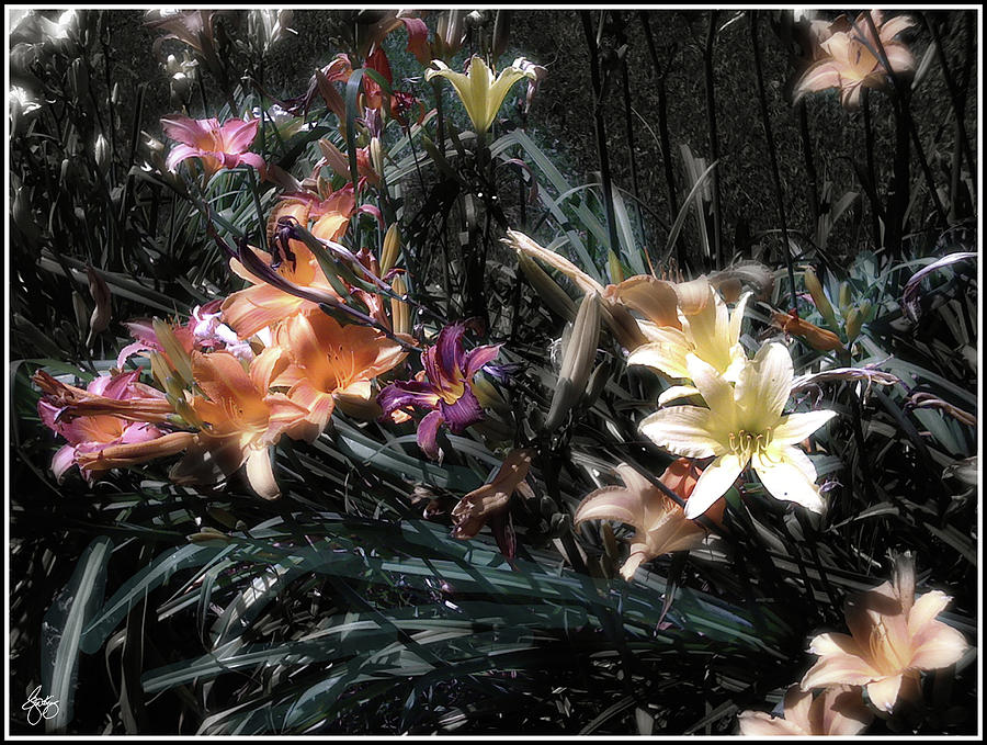 Lily Photograph - Painted Lilies by Wayne King