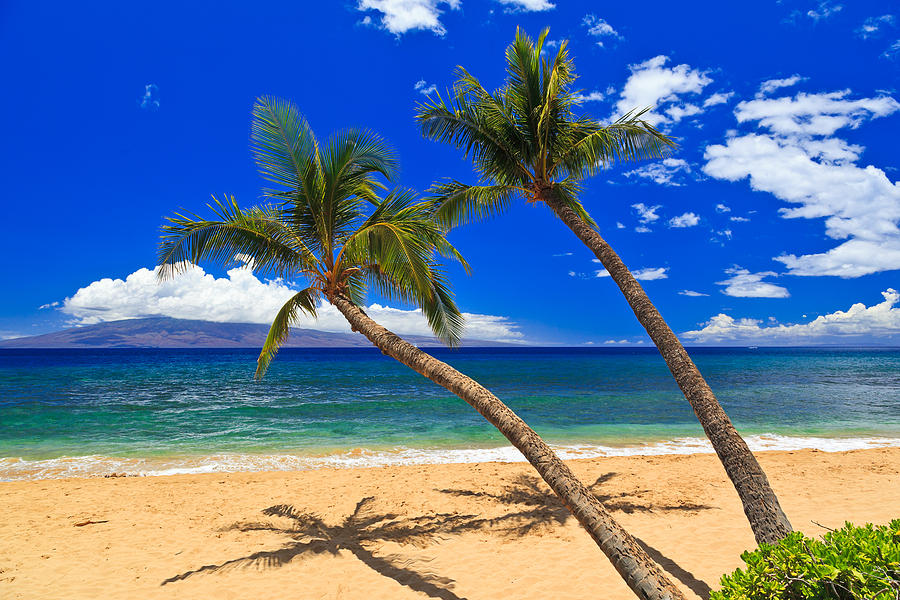 2 Palm Trees On A Sunny Day At A Beautiful Sandy Beach