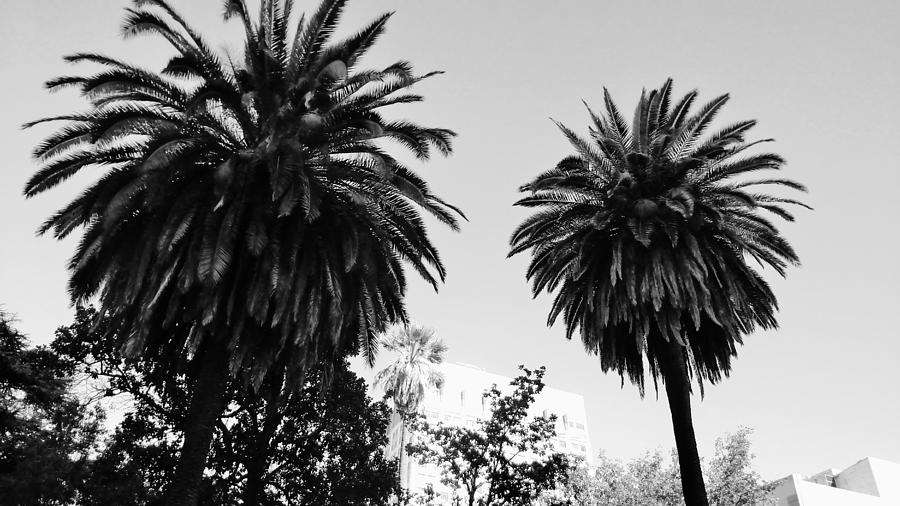 Palm Trees Photograph - Palm Trees by Peggy Leyva Conley