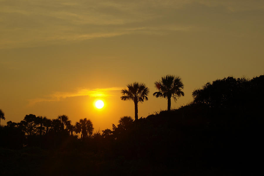 Sunset Photograph - 2 Palms In The Sunset by Heidi Berkovitz