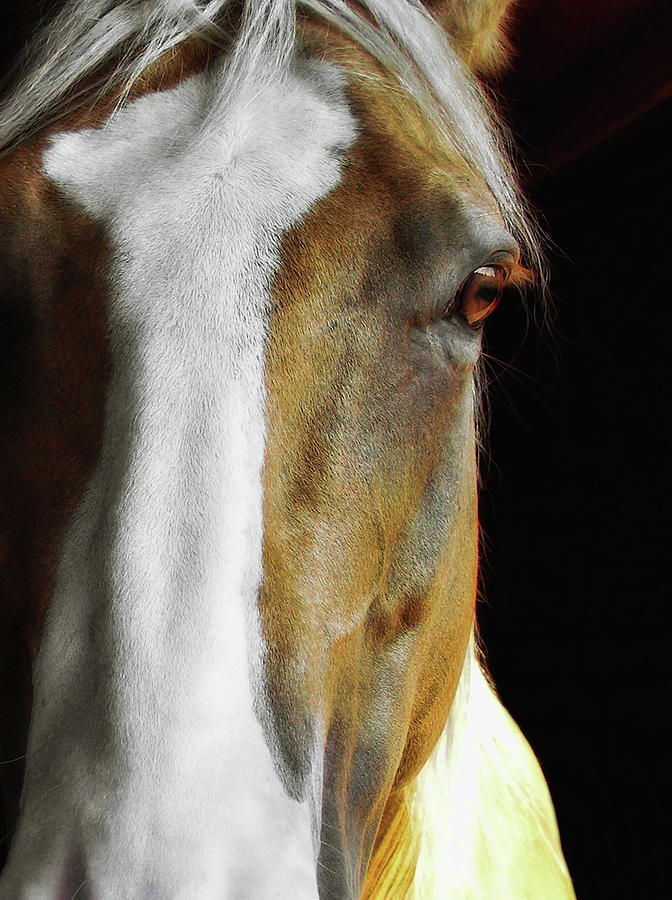 Horse Photograph - Palomino by JAMART Photography