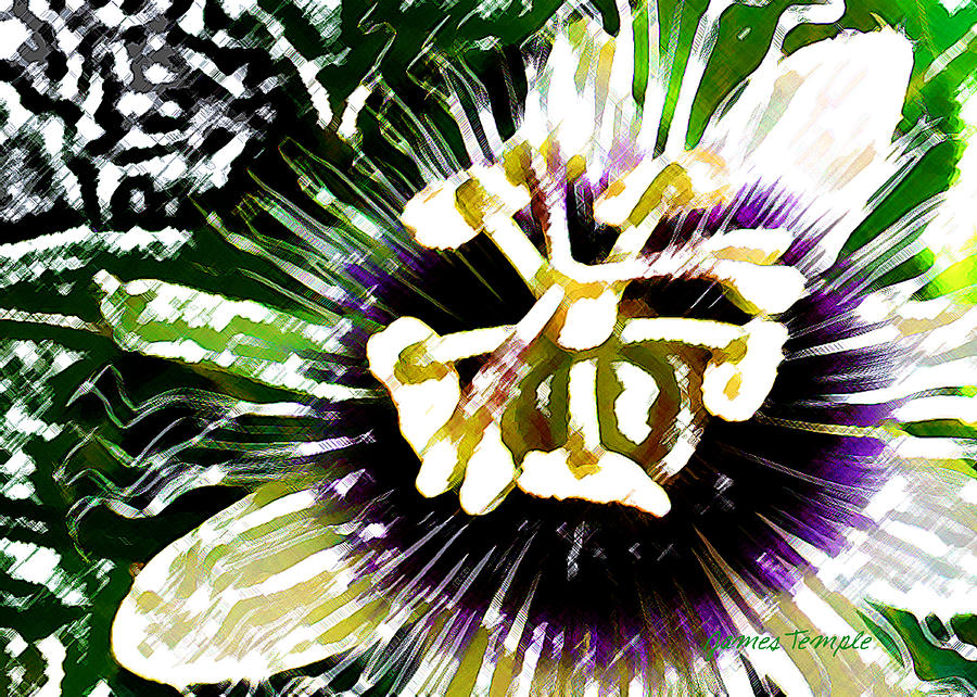 Passion Fruit Flower Digital Art - Passion Flower by James Temple