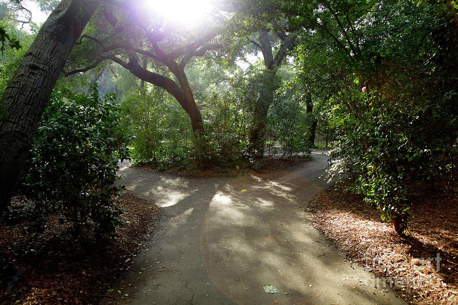 2 Paths Photograph