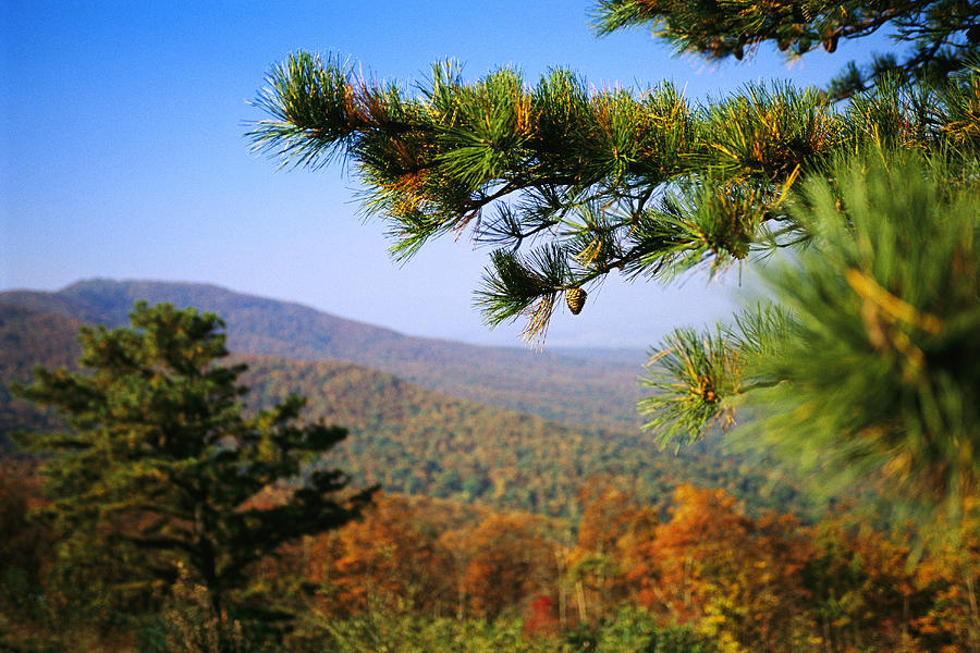 North America Photograph - Pine Tree And Forested Ridges by Raymond Gehman