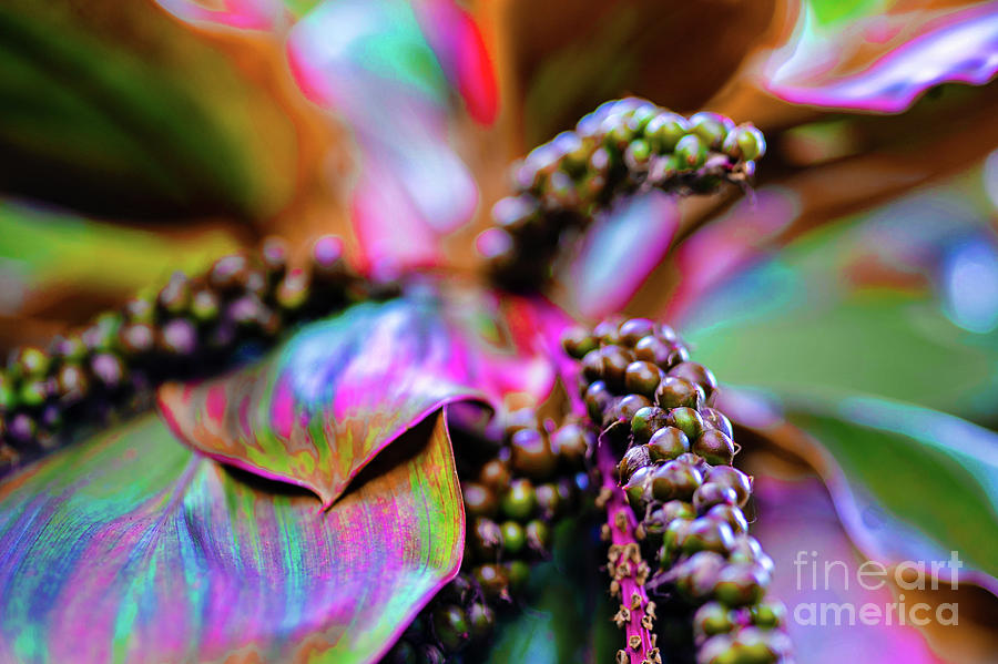 Plants Photograph - Plants And Flowers In Hawaii by D Davila