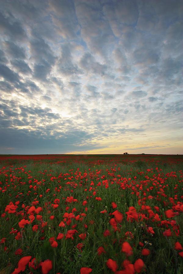 Poppy Field Photograph - Poppy Field by Graham Custance
