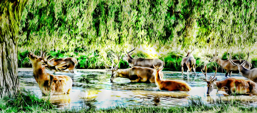 Herd Of Deer Photograph - Princes Of The Forest by Jason Christopher