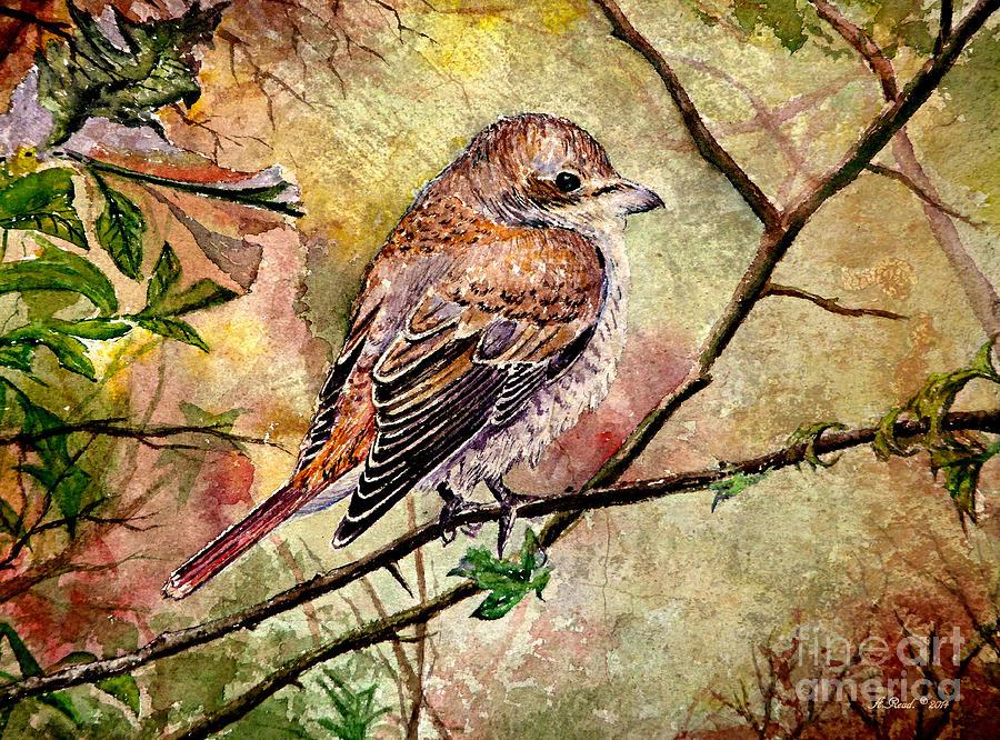 Red Backed Shrike Painting