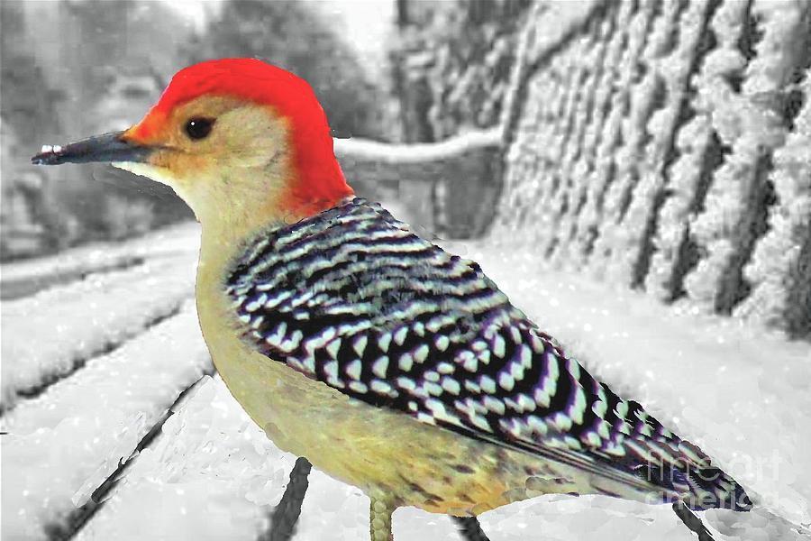 Woodpecker in Winter by Janette Boyd