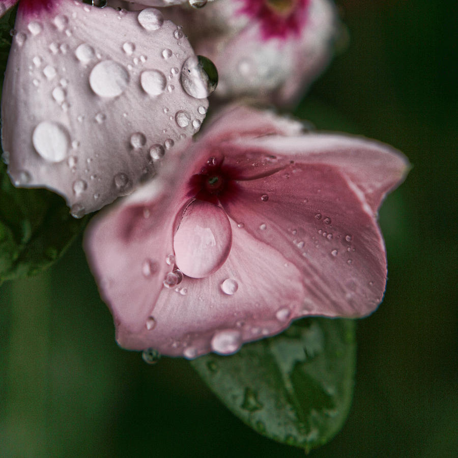 Rainy Day Photograph - Refreshed by Bonnie Bruno