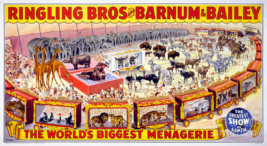 Ringling Brothers And Barnum And Bailey Vintage Poster