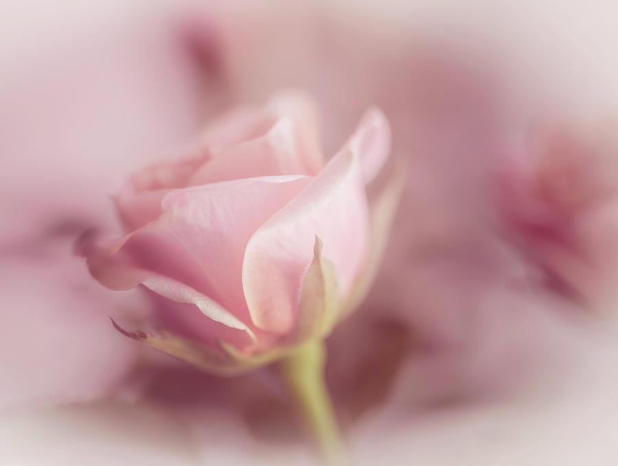 Romance Photograph - Romance by Cindy Grundsten