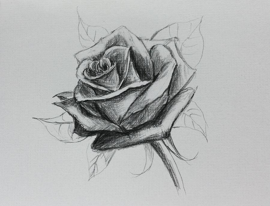 рисунки розочки красивые