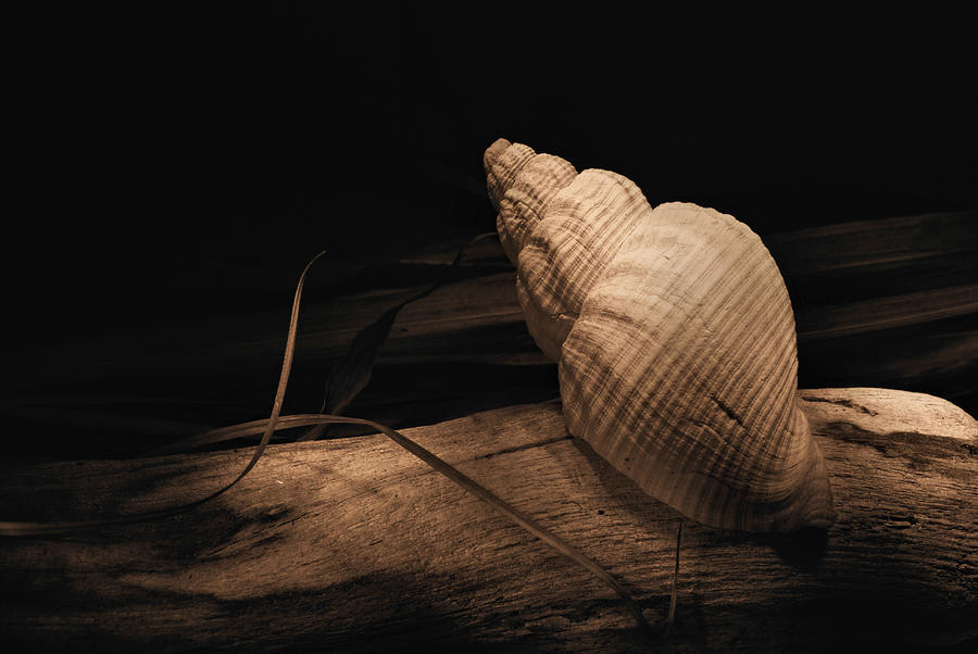 B W Photograph - Shell by Fraser Davidson