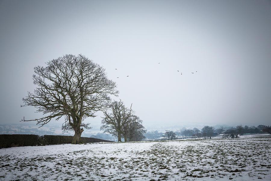 Snowy field by Raelene Goddard