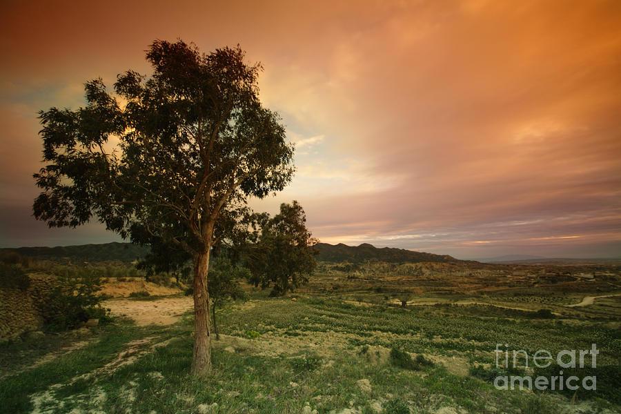 Tree Photograph - Spanish Landscape by Angel  Tarantella