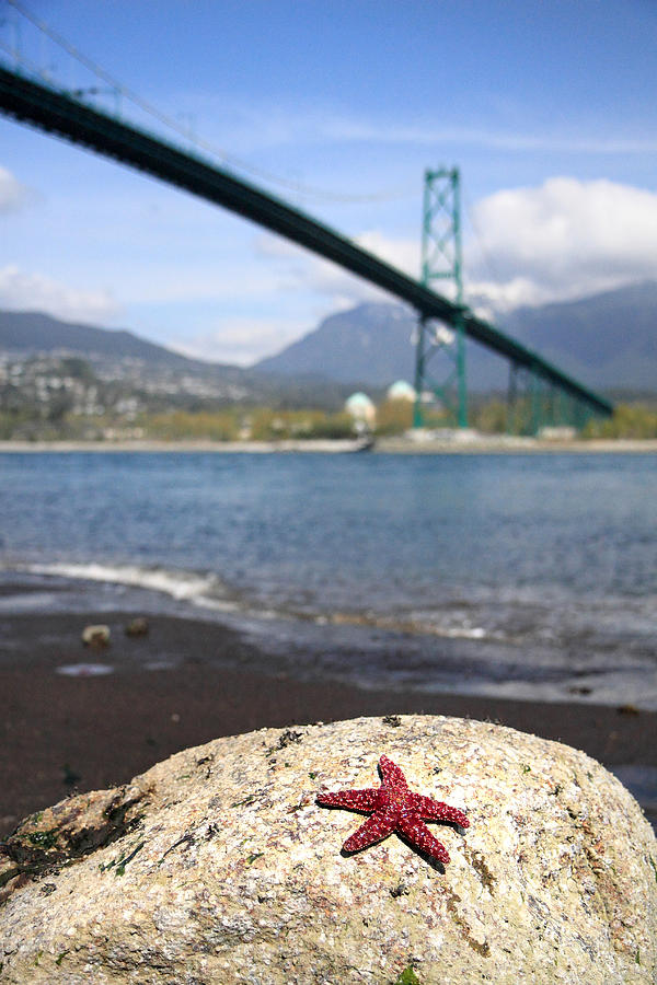Star Fish Photograph - Starfish Stanley Park Vancouver by Pierre Leclerc Photography
