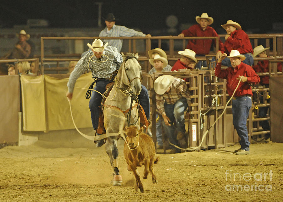 Horse Photograph - Steer Wrestling by Dennis Hammer