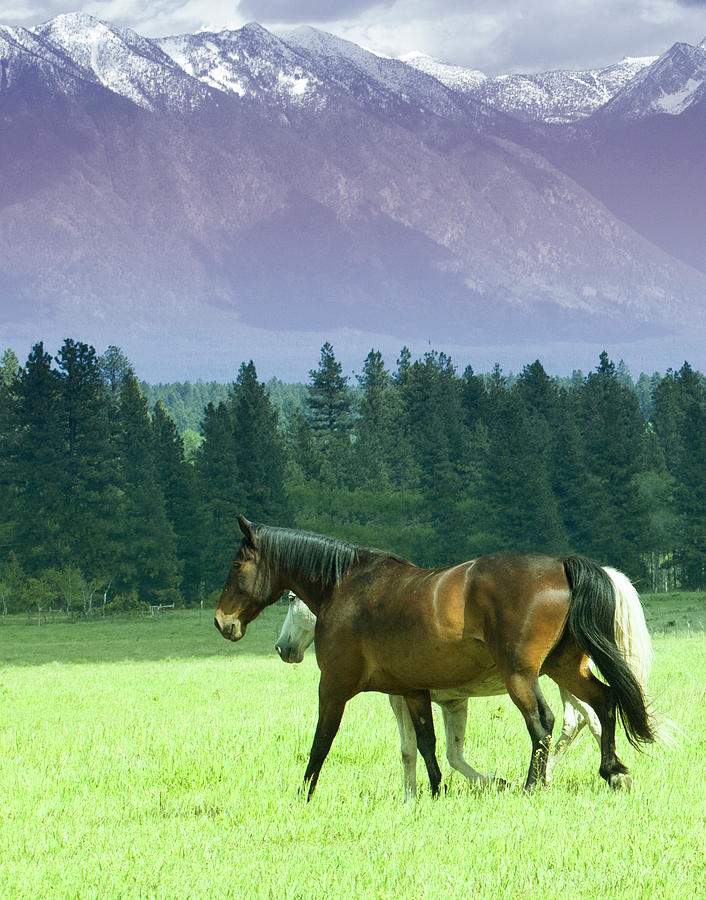 Horses Photograph - Strolling by Eleszabeth McNeel