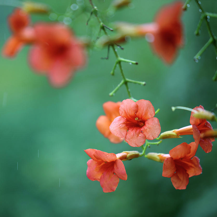 Summer Flowers Photograph
