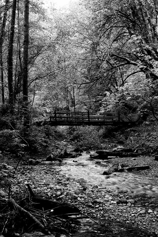 Black And White Photograph - Swan Creek Park by David Patterson