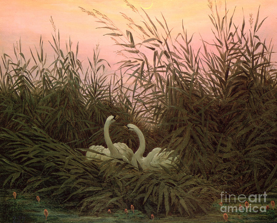Swan Painting - Swans In The Reeds by Caspar David Friedrich