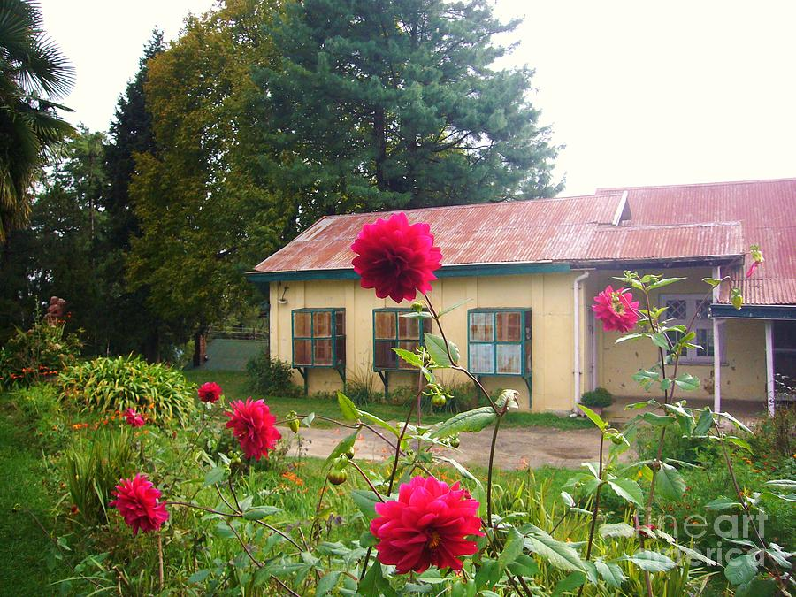 Nature Photograph - The Cottage by Sunaina Serna Ahluwalia