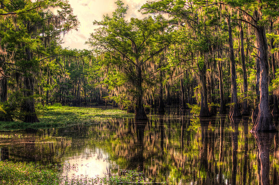 Bayou Photograph - Tranquility by Ester McGuire