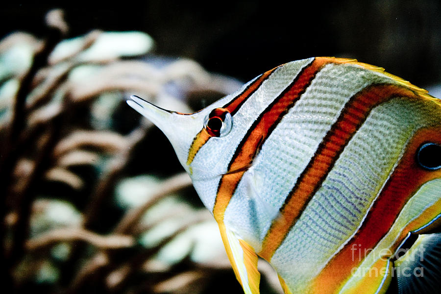 Fish Photograph - Tropical Fish by Brenton Woodruff