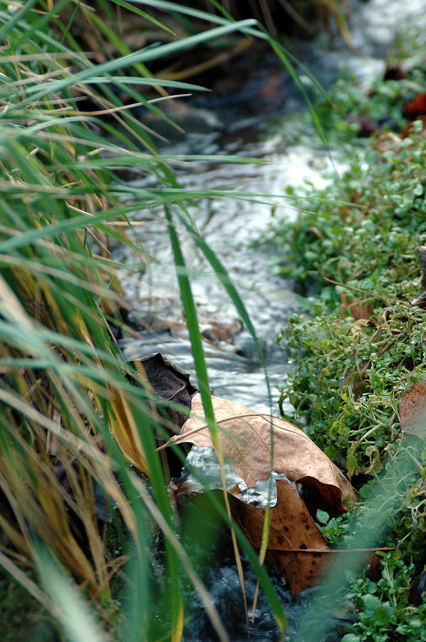 Stream Photograph - Untitled by Kathy Schumann