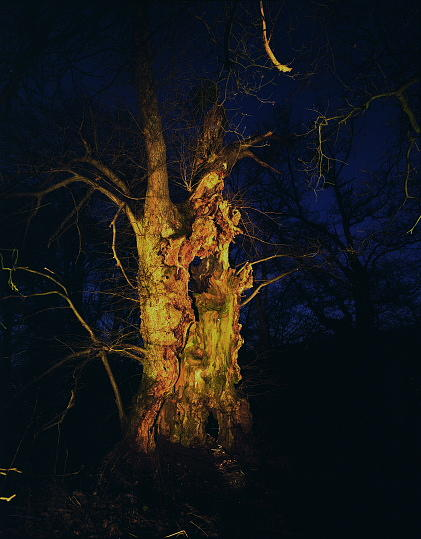 Landscape Photograph - Untitled  Series Night Tree by Markus Redert