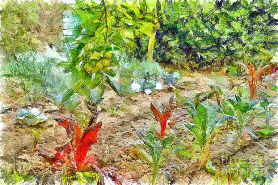 Pencil Digital Art - Vegetable Garden by Giuseppe Cocco