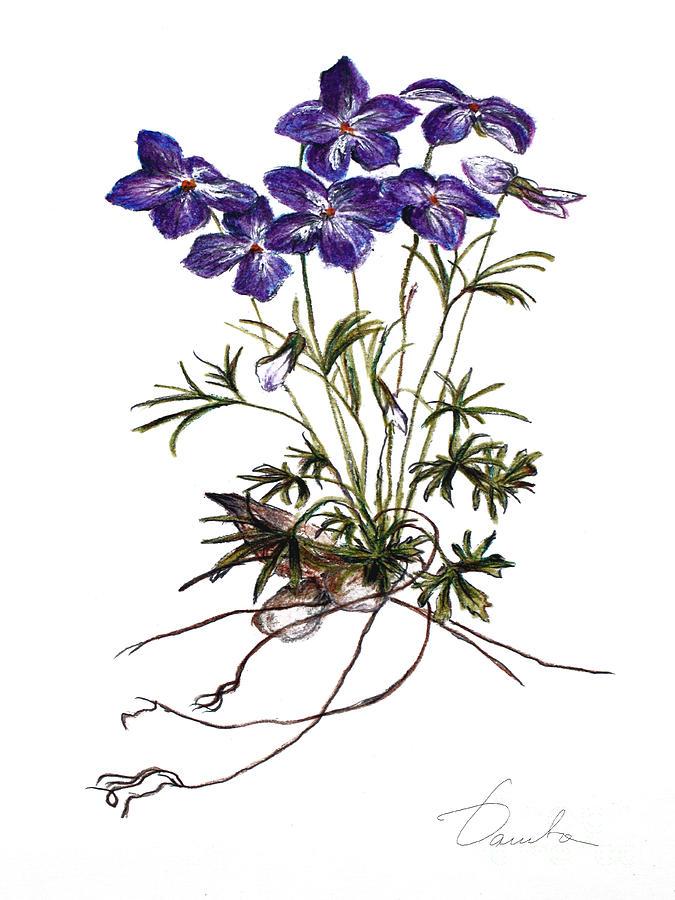 Violets Painting by Danuta Bennett