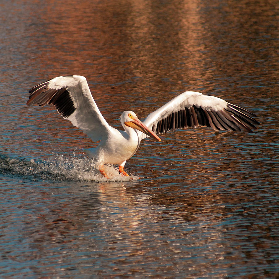 Water Landing by Howard Bagley