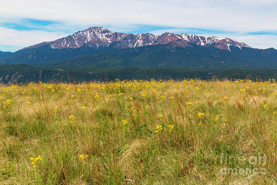 Wildflowers And Pikes Peak Photograph
