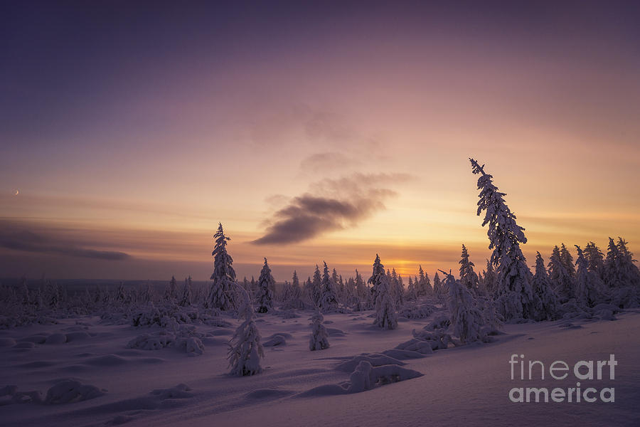 Sky Photograph - Winter Evening Landscape With Forest, Sunset And Cloudy Sky.  by Oxana Gracheva