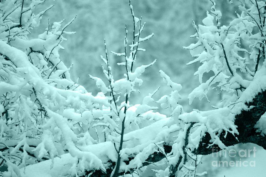 Winter Wonderland In Switzerland Photograph