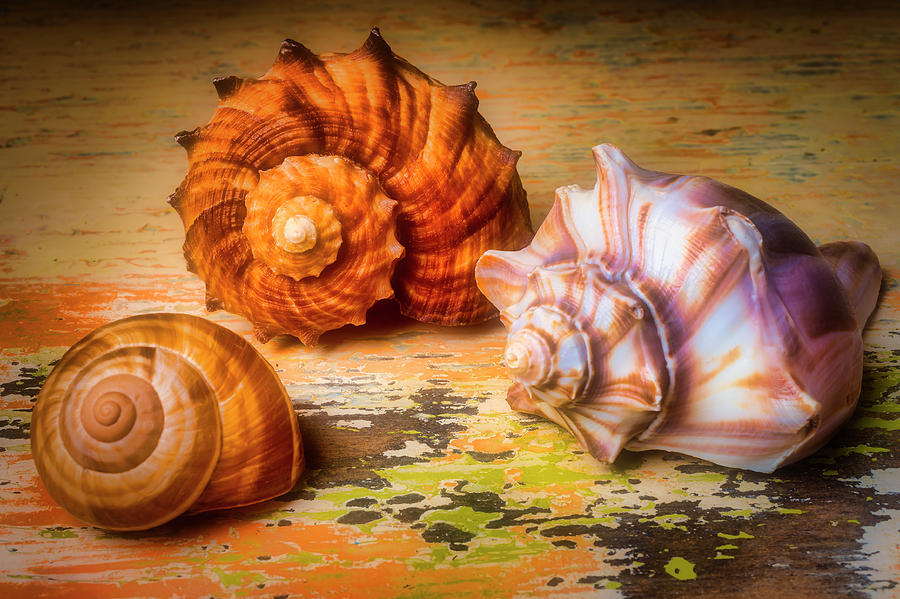 Beautiful Lovely Photograph - Wonderful Shell Still Life by Garry Gay