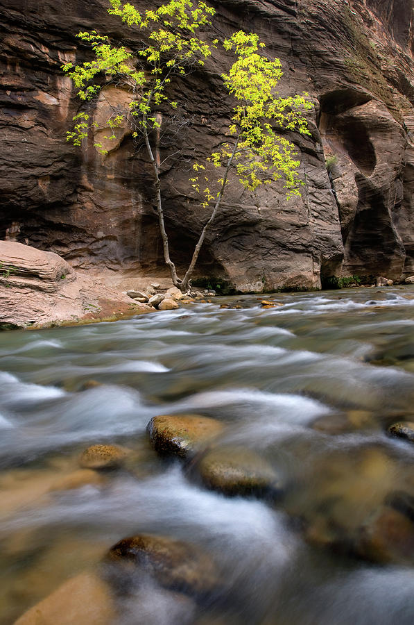 The Narrows Photograph - Zion National Park Narrows by Dean Hueber