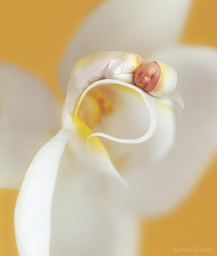 Floral Photograph - Nate On A Moth Orchid  by Anne Geddes