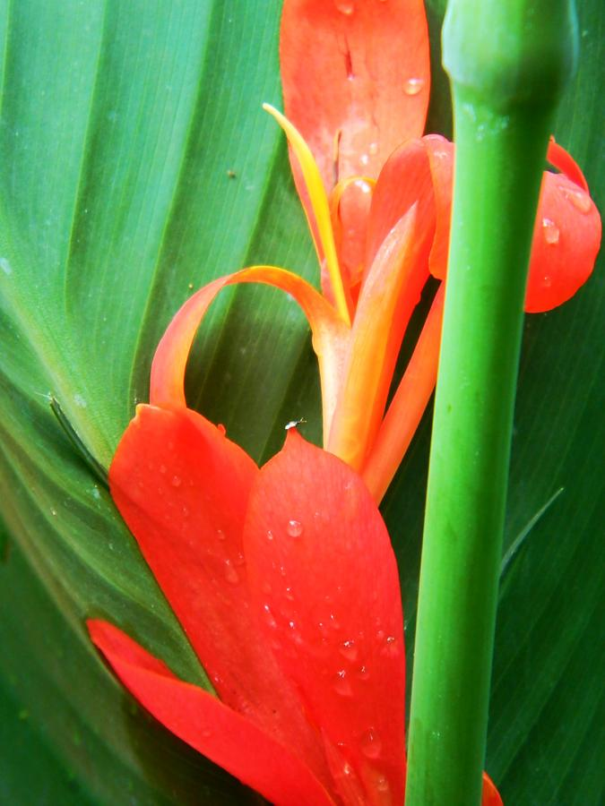 Green Photograph - Untitled by Joy Montgomery