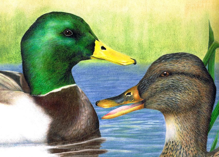 Ducks Drawing - 2008 Mallards by Brandon Sharp
