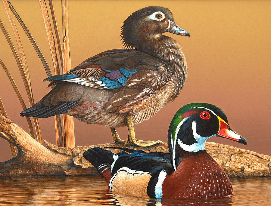 Duck Stamp Painting - 2009-2010 Alabama Migratory Waterfowl Stamp by John Denney