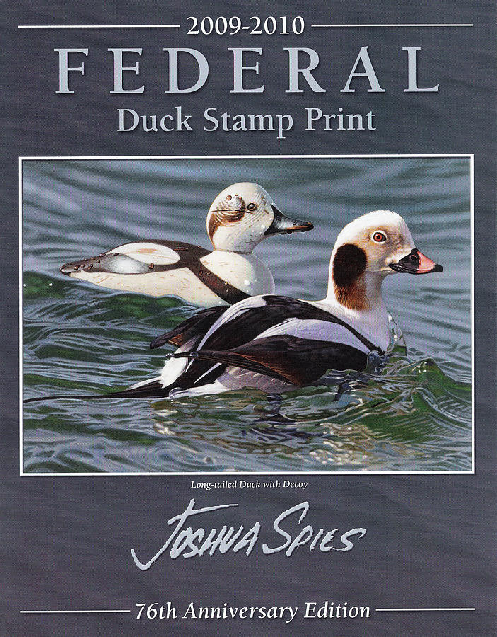 Wildlife Painting - 2009 Federal Duck Stamp by Joshua Spies