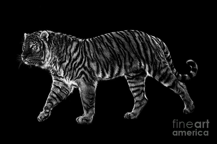 Siberian Drawing - Tigers Gait by Laurie Musser