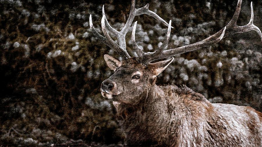 Elk Photograph - 2016 Art Series #24 by Garett Gabriel