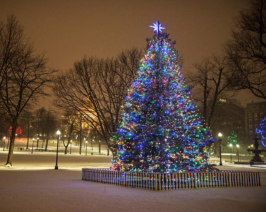 2016 Boston Common Christmas Tree Boston Ma Snowstorm ...