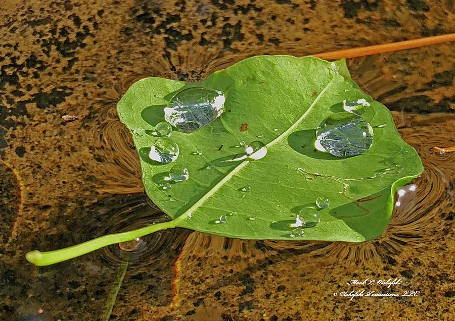 Leaf Photograph - 2018 08 31 Sign  H2o Leaf Img_5999 by Mark Olshefski