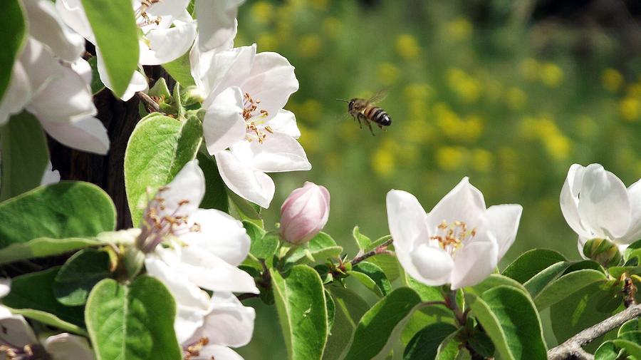 207210 flowers bees white flowers spring digital art by mery moon mightylinksfo