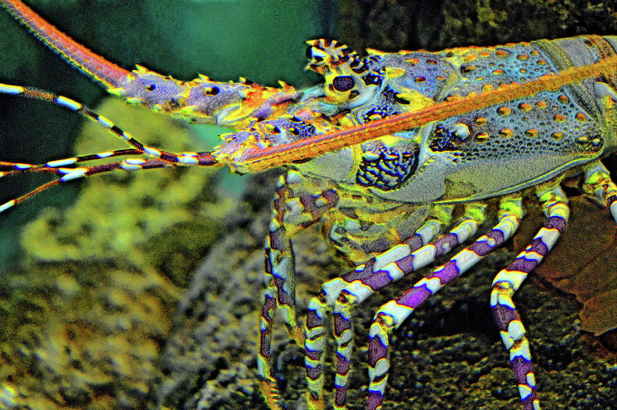 Underwater World Digital Art - Underwater World. by Andy Za